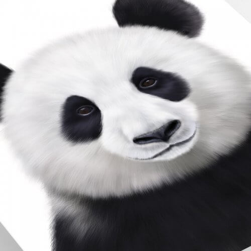 Panda art print close up