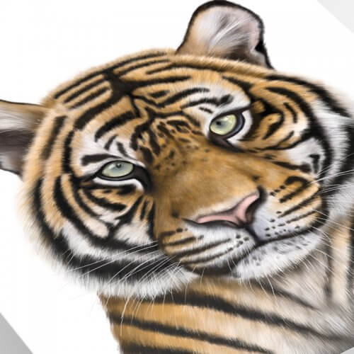 Tiger art print close up