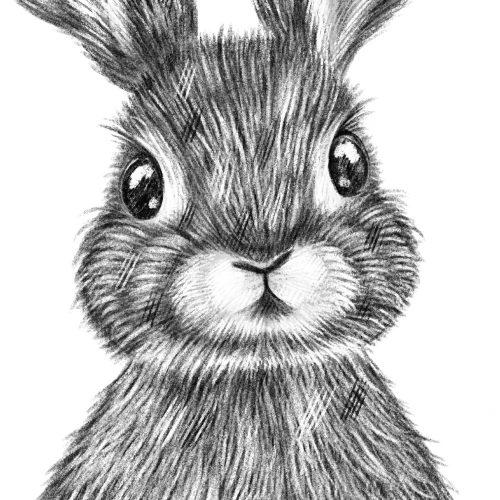 Baby Rabbit Print Pencil Details